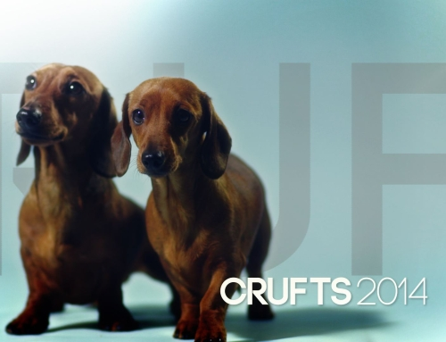 Crufts Titles 2014