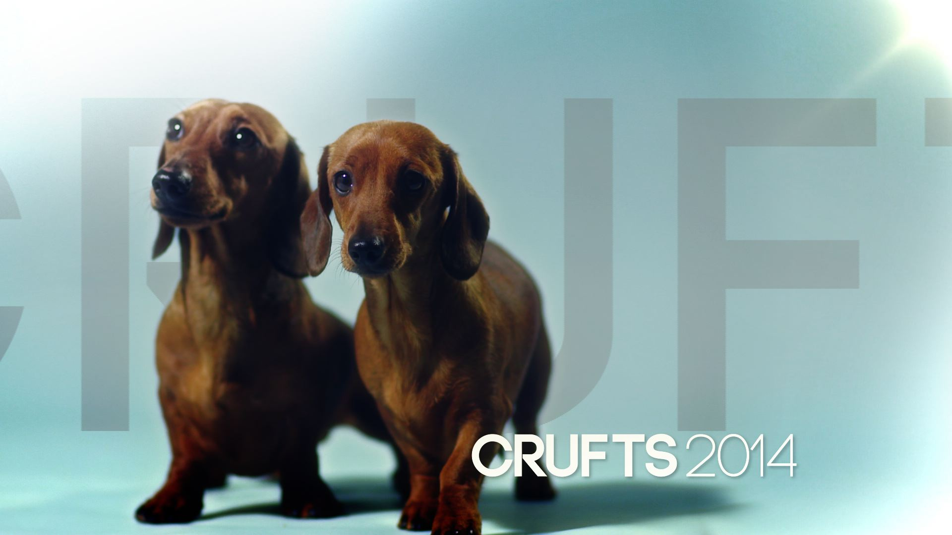 Crufts-Still-1